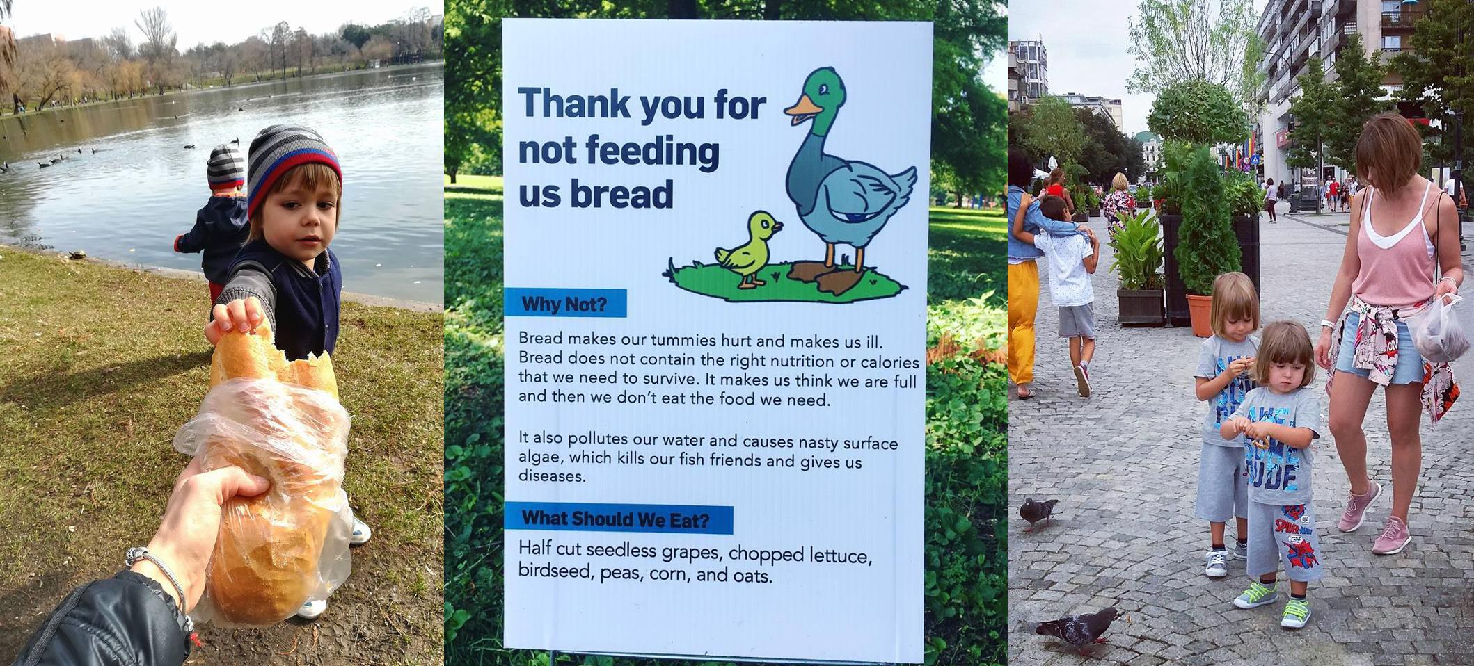 cum hranim pasarile salbatice sfaturi