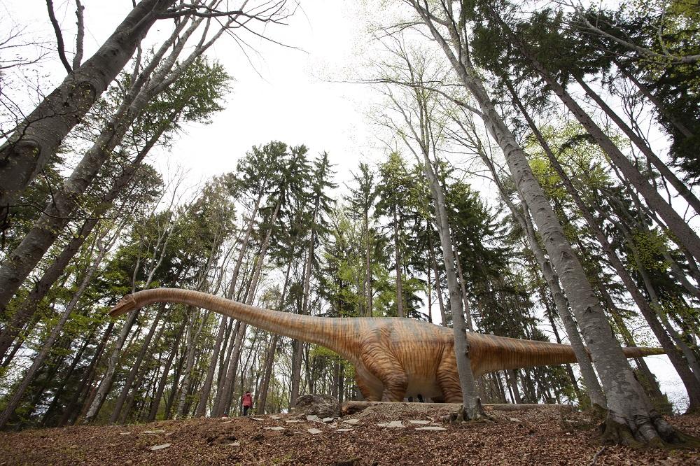 Dino Parc Rasnov seismosaurus