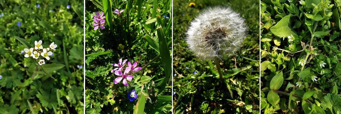 flori primavara izolare coronavirus